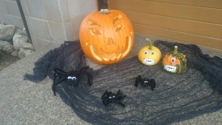 Spinnen-gross