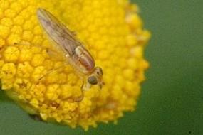 Ungebeten Gäste im Winter - welche Insekten nisten sich im Haus ein